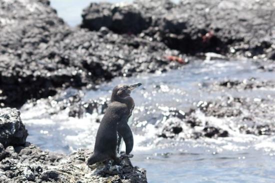Puerto Villamil, Ecuador: On Las Tintereras