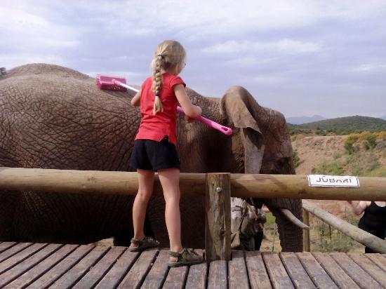 Oudtshoorn, Νότια Αφρική: Elephant Brush
