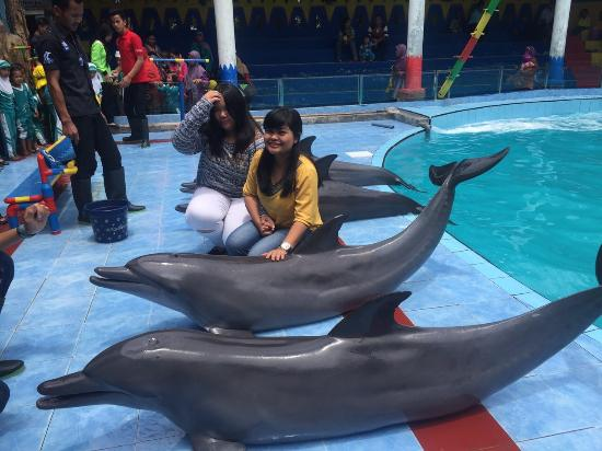 Kendal, Indonesia: Dolphin Show
