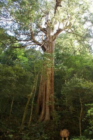 Taoyuan, Taiwan: 拉拉山自然保護區