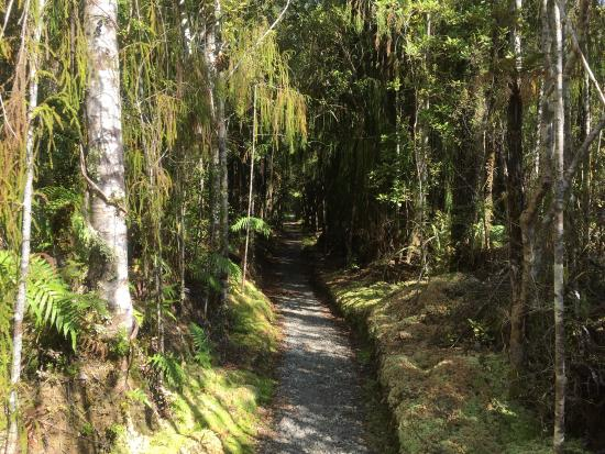 Westland National Park (Te Wahipounamu), New Zealand: photo8.jpg