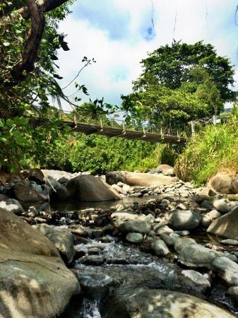 Uvita, Kosta Rika: Jungle