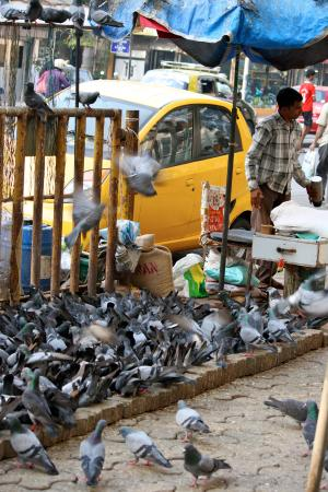 Hotel Kumkum: feeding pigeons along the street- we always knew exactly where the hotel was