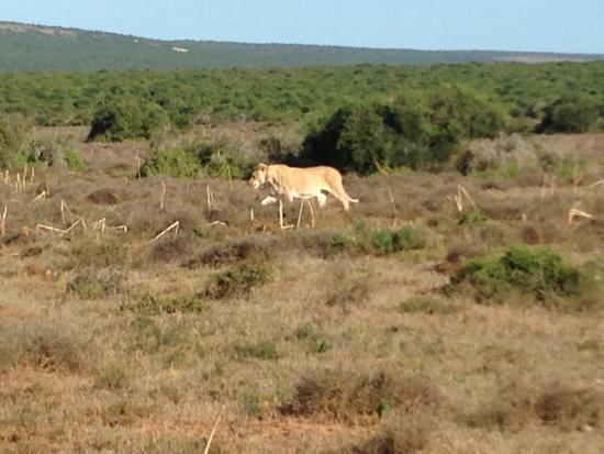 Addo Elephant National Park, แอฟริกาใต้: photo0.jpg