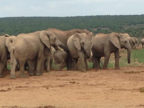 Addo Elephant National Park, แอฟริกาใต้: photo1.jpg