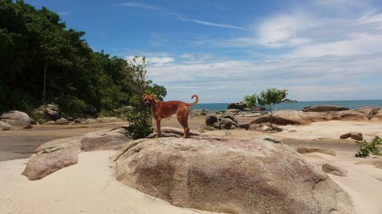 Chintheche, มาลาวี: Jet The Boxer and My Good Friend