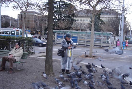 Pigeons are in plenty in Zurich... Near Regina...