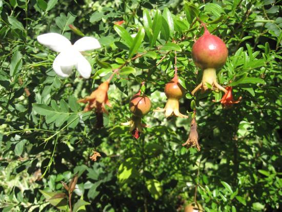 San Giovanni la Punta, Italien: Nel giardino