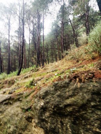 El Chorro, Spanyol: bosque de pinos