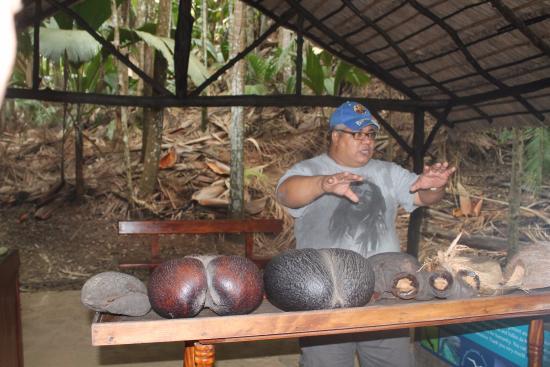 Isola di Praslin, Seychelles: продавец коко де меров