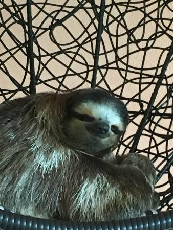 Aviarios del Caribe Sloth Sanctuary: photo1.jpg