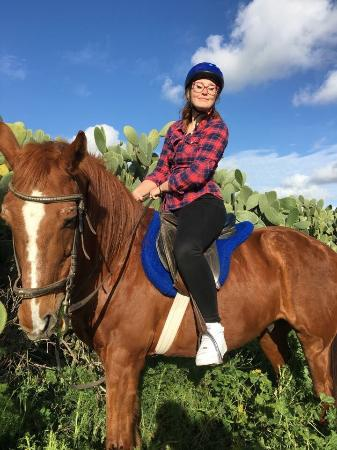 Golden Bay Horse Beautiful sunset. - Pi...