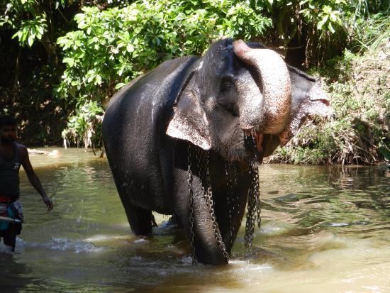Pinnawala, ศรีลังกา: Happy after a wash