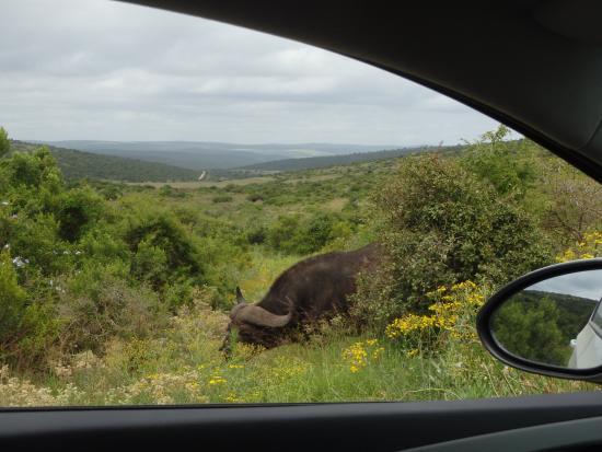 Addo Elephant National Park, Sudafrica: Game watching