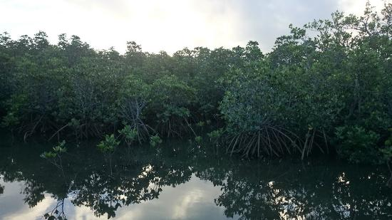 Mangrove at Ishinagata Beach