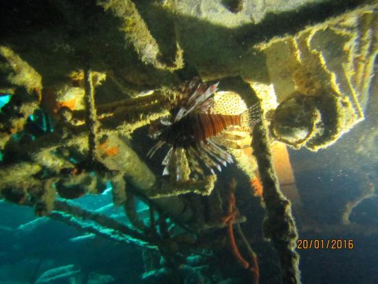 Bayahibe, Δομινικανή Δημοκρατία: Inside in wreck (atlantic princess)
