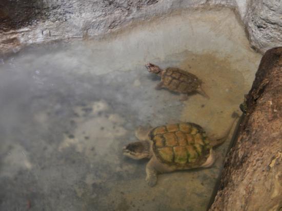 Cocodrilo Park zoo - Picture of Cocodrilo Park Gran Canaria