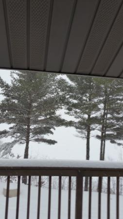 Pleasant View Bed and Breakfast: View from our room. Lake beyond the pine trees.