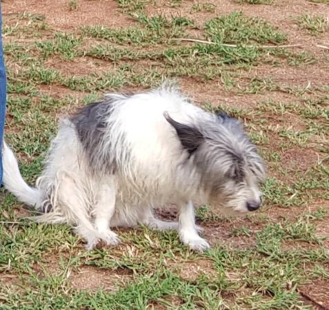 Hazyview, Sydafrika: Shaun's friendly dog, Peaches.