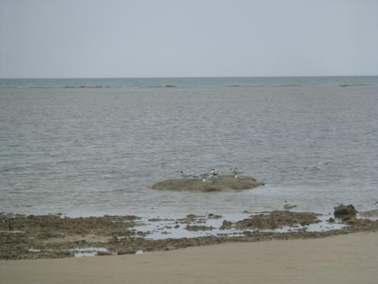 Ponta de Itaquena : alguns pássaros em busca de alimento nas piscinas naturais.