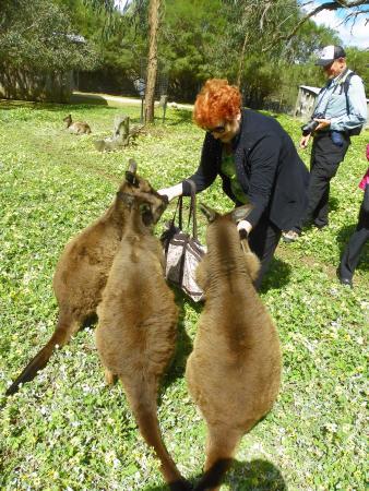 Seddon, Australia: Feeding Kangaroos