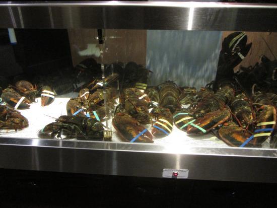 เมอร์รีย์, ยูทาห์: Lobsters -Before They Become Red Lobsters