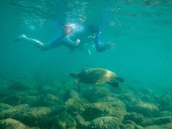 Dominical, Costa Rica: We keep seeing the turtle!