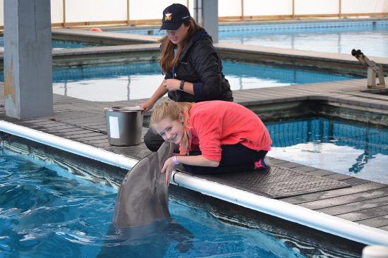 dolphin meet and greet picture of the institute for marine mammal rh tripadvisor co uk