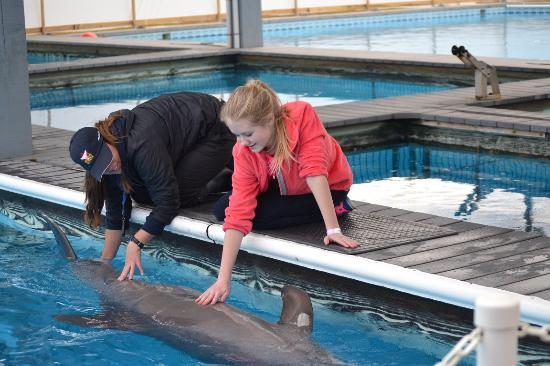 dolphin meet and greet picture of the institute for marine mammal rh tripadvisor com