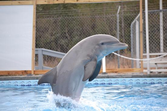 dolphin show picture of the institute for marine mammal studies rh tripadvisor in