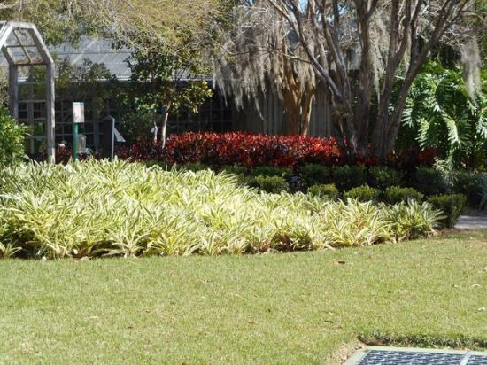 Largo, FL: Flax flowers and red crotos. Beautiful display.
