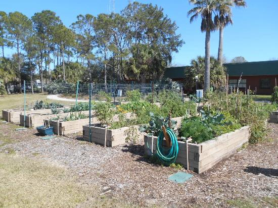 Largo, FL: Raised beds for veggies. Not a good time (very cold) for veggies.