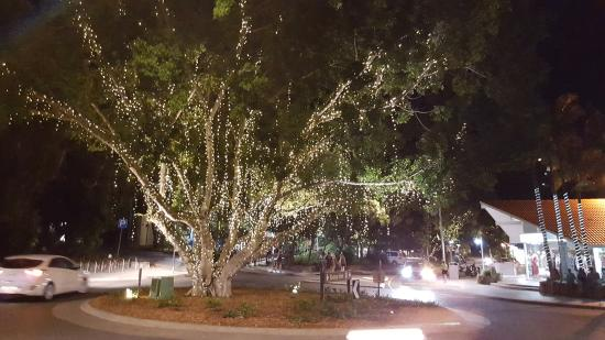 Noosa, Austrália: Trees are lit at night