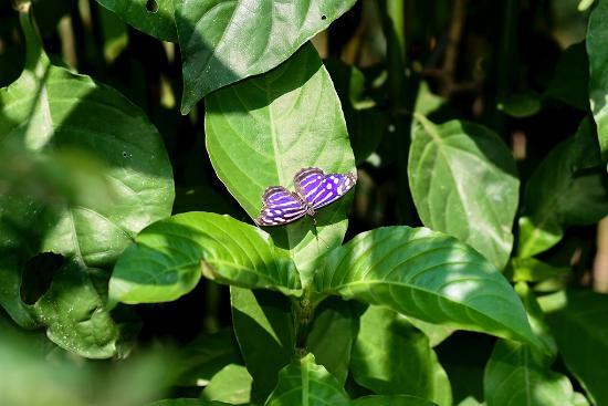 Poas Volcano National Park, Costa Rica: Butterfly house