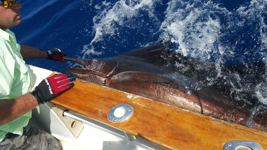 Увита, Коста-Рика: Dominical Costa Rica Sailfish
