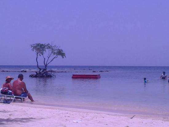 Roatan Pirates Bay: the beach area we snorkeled in