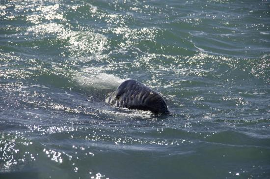 Baja Ecotours: Baby whale