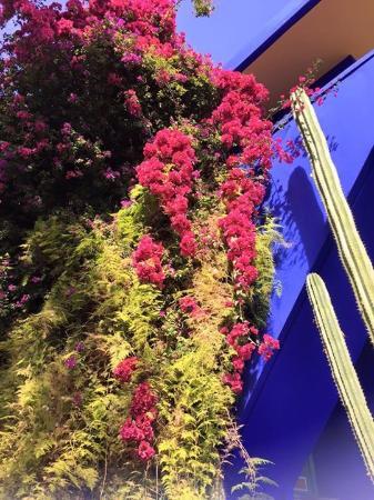 Riad Assalam: Jardin Majorelle