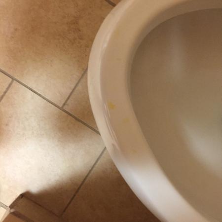 Van Buren, AR: Urine on toilet