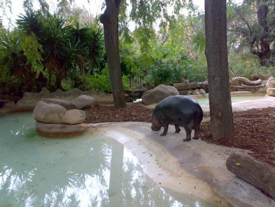Zoo Barcelona zoo barcelona karzełek picture of barcelona zoo barcelona