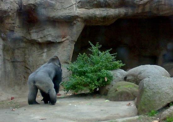 Zoo Barcelona zoo barcelona śladem king konga picture of barcelona zoo