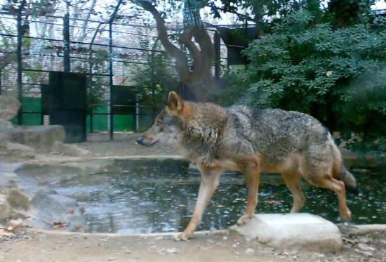 zoo barcelona dzikość serca picture of barcelona zoo barcelona