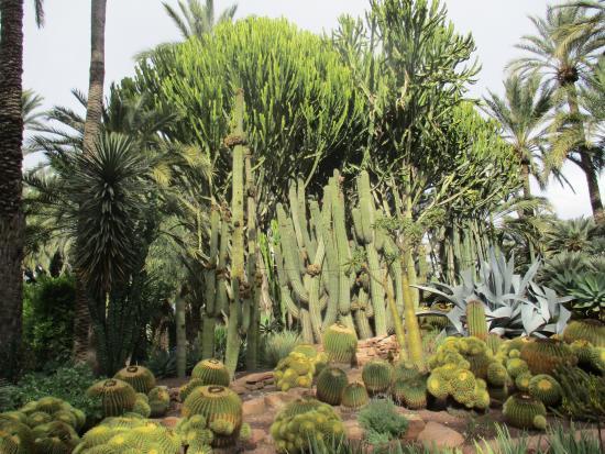 Cactus - Bild von Huerto Del Cura Jardin Artistico Nacional, Elche - TripAdvisor