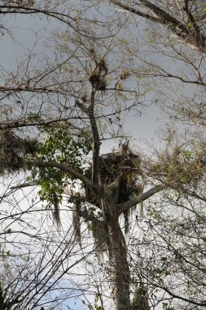 Copeland, FL: Eagle Nest on Big Cypress Bend Boardwalk Trail