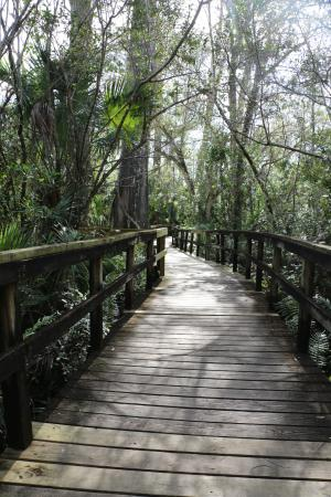 Copeland, FL: Big Cypress Bend Boardwalk Trail
