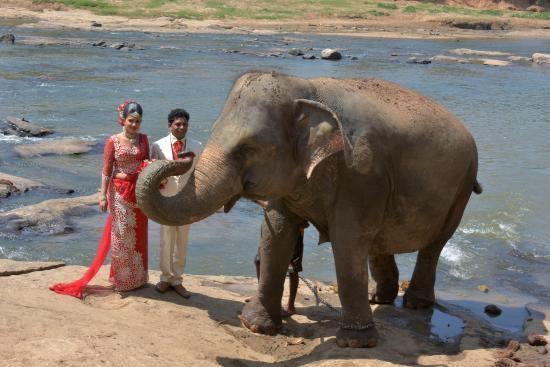 Pinnawala, ศรีลังกา: 新婚カップル
