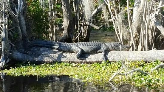 DeBary, FL: 20160211_152537_large.jpg