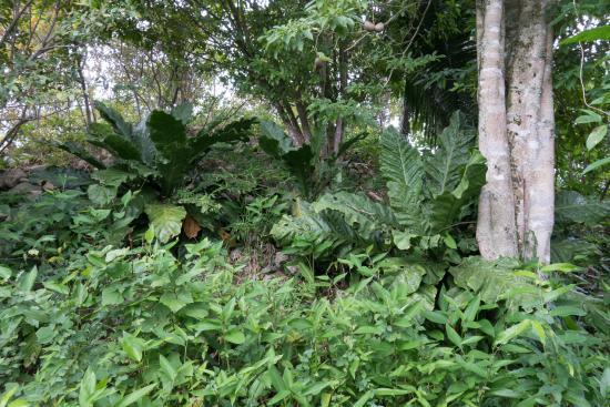 Toledo District, Belize: Vegetation at secound mound