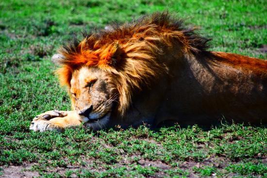 Adventure Mara Tours and Safaris