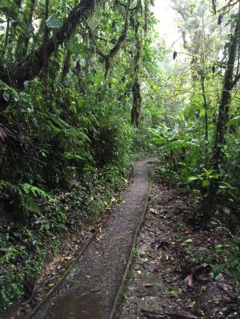 Monteverde Cloud Forest Reserve, كوستاريكا: photo0.jpg